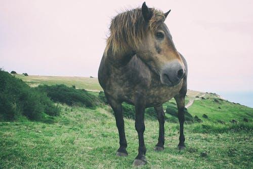 Free stock photo of cavallo, selvaggio