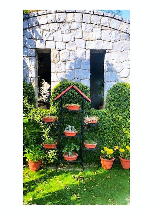 Free stock photo of #mobilechallenge, #outdoorchallenge, beautiful flowers, iphone 11