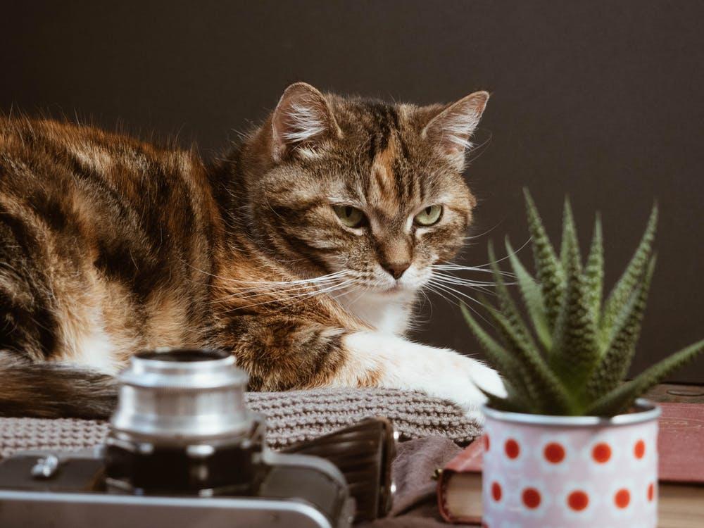 Brown Tabby Cat Looking on Green Plant
