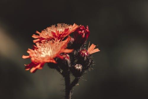 Close-Up Photo of Orange Flowers