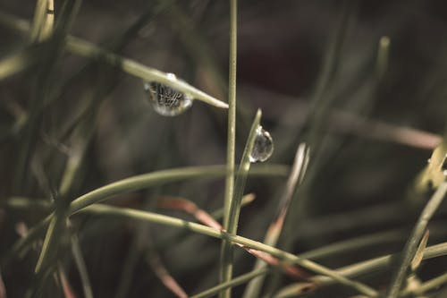 Close-Up Photo of Water Drops On Grass