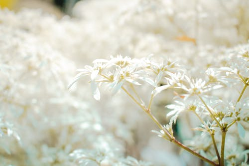 Free stock photo of beautiful flower, spring, white flower, white flowers