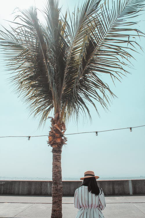 Photo Of Person Near Palm Tree