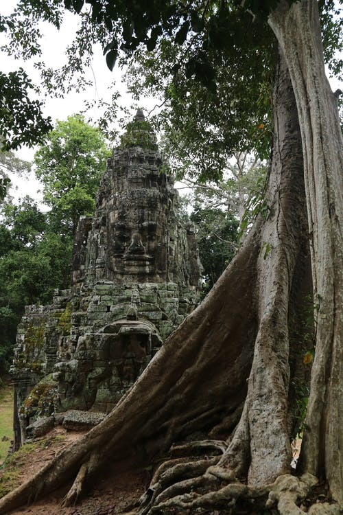 Old Bayon style decorative church facade on dry terrain near tree trunk with dense texture under serene sky in daylight in Angkor Thom