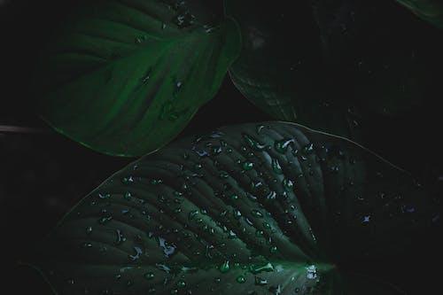 Gratis stockfoto met bladeren, close-up, dauw, dauwdruppels