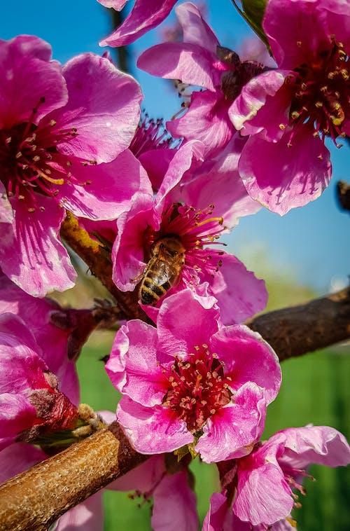 ピンクの花, フォーカス, フラワーズの無料の写真素材