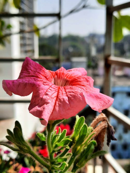 Close-Up Photo Of Pink Hibiscus