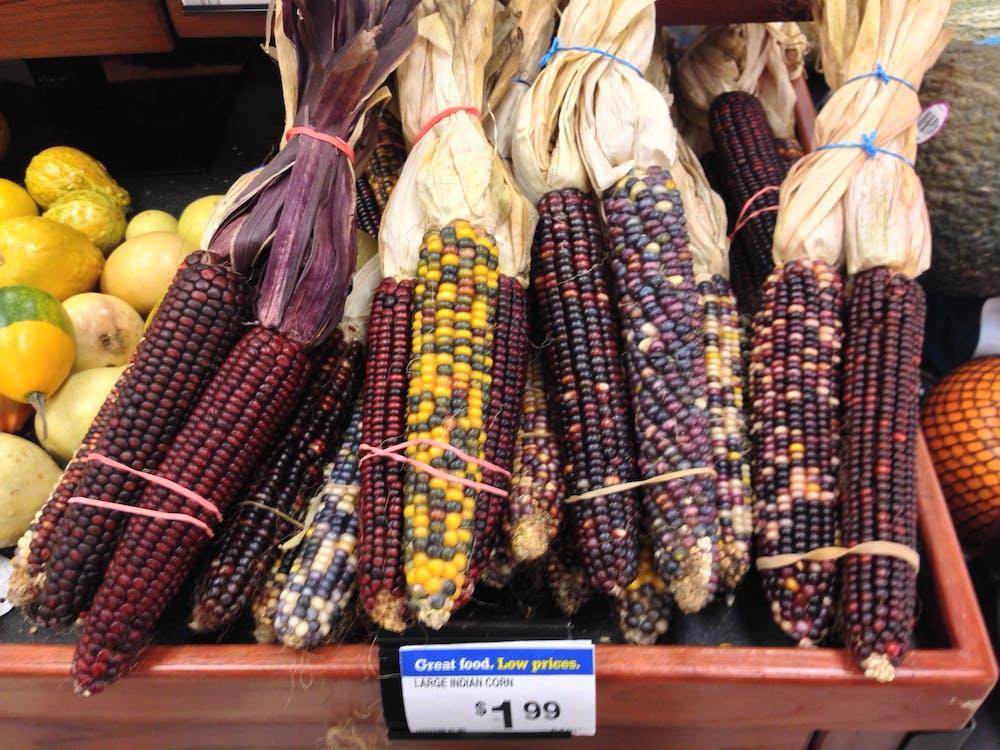Free stock photo of corn, food, produce