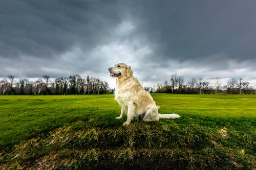 Photo Of Dog Sitting On Grassfield