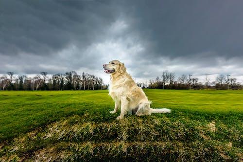 Ilmainen kuvapankkikuva tunnisteilla dramaattinen taivas, eläin, eläinkuvaus, istua