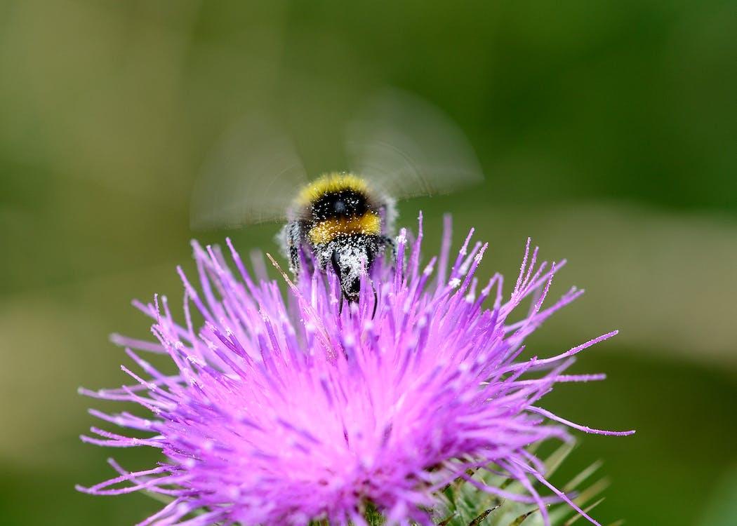 Macro Photography Of Bee On Purple Flower
