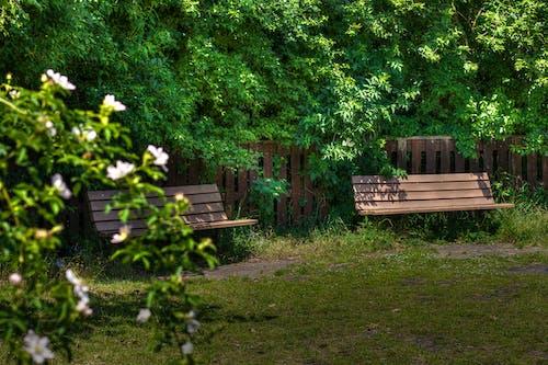 Free stock photo of chair, evergreen, garden
