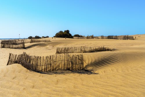 Sandy dunes with lonely trees near sea