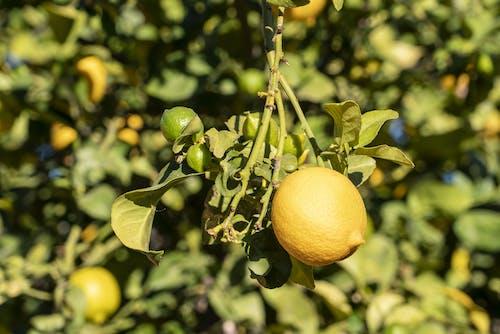 Close-Up Photo Of Lemon
