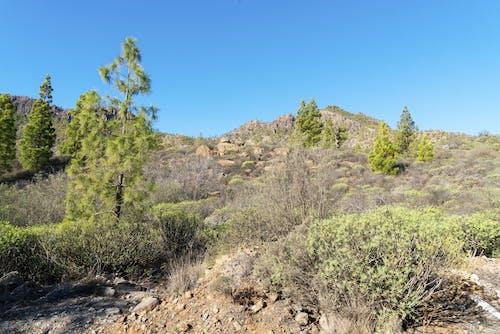 Green Trees on Brown Soil Under Blue Sky