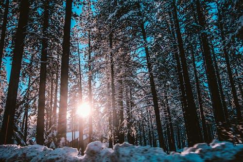 Foto stok gratis alam, bidikan sudut sempit, cahaya, cuaca