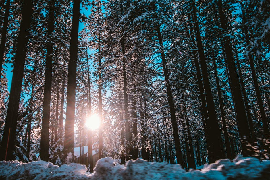 New free stock photo of cold, snow, light