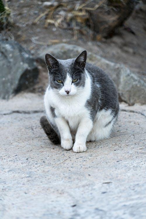 Foto d'estoc gratuïta de adorable, animal, animal domèstic, assegut