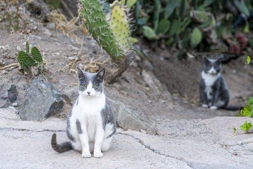 Photo Of Cat Near Cactus Plant