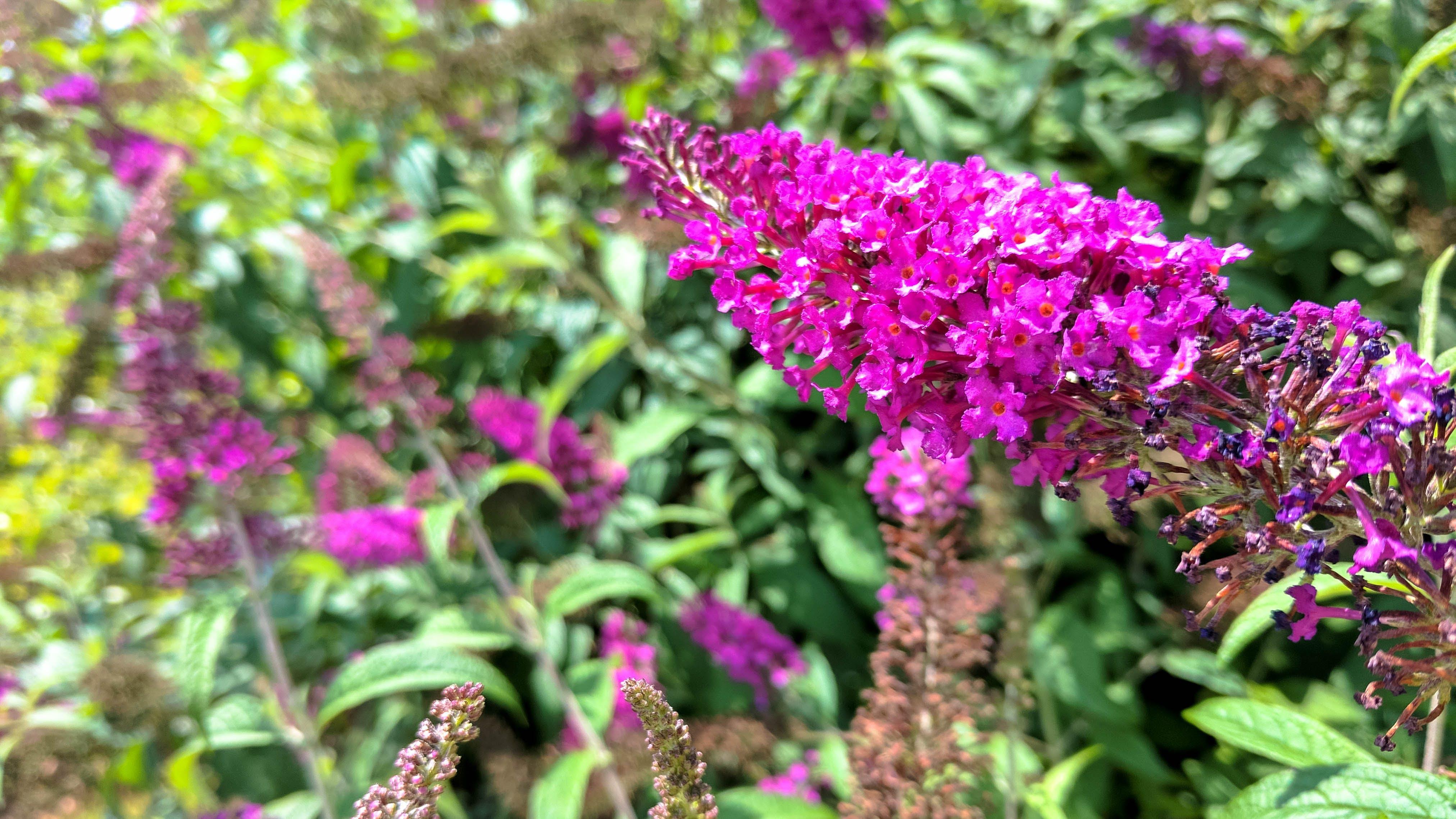 Free stock photo of beautiful flowers, flower, flowers, pink flowers