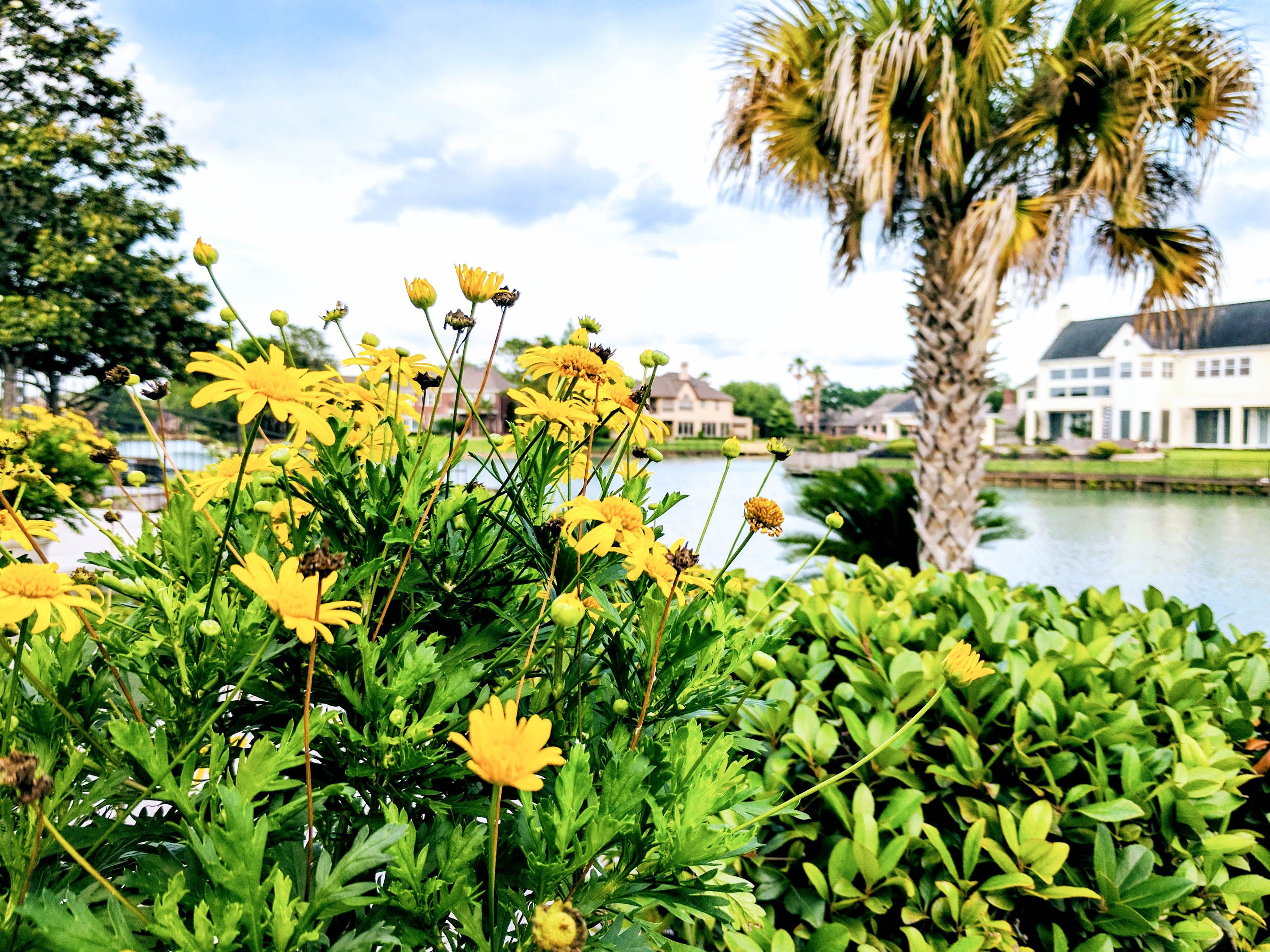 Free stock photo of beautiful floers, flower bed, flowers, pond