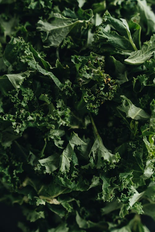 besleyici, dikey atış, Gıda içeren Ücretsiz stok fotoğraf
