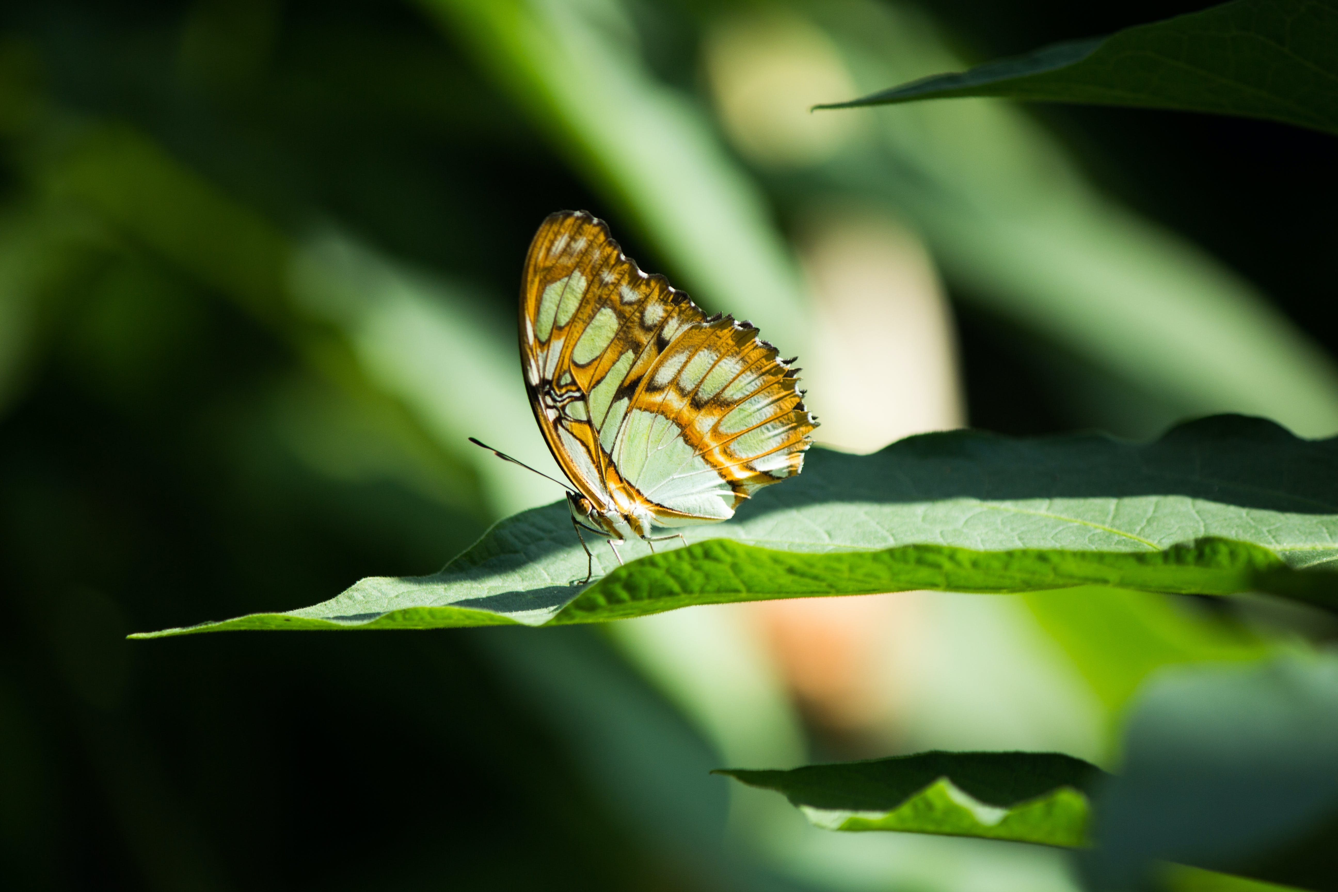 Yellow and White Butterfly on Green Leaf