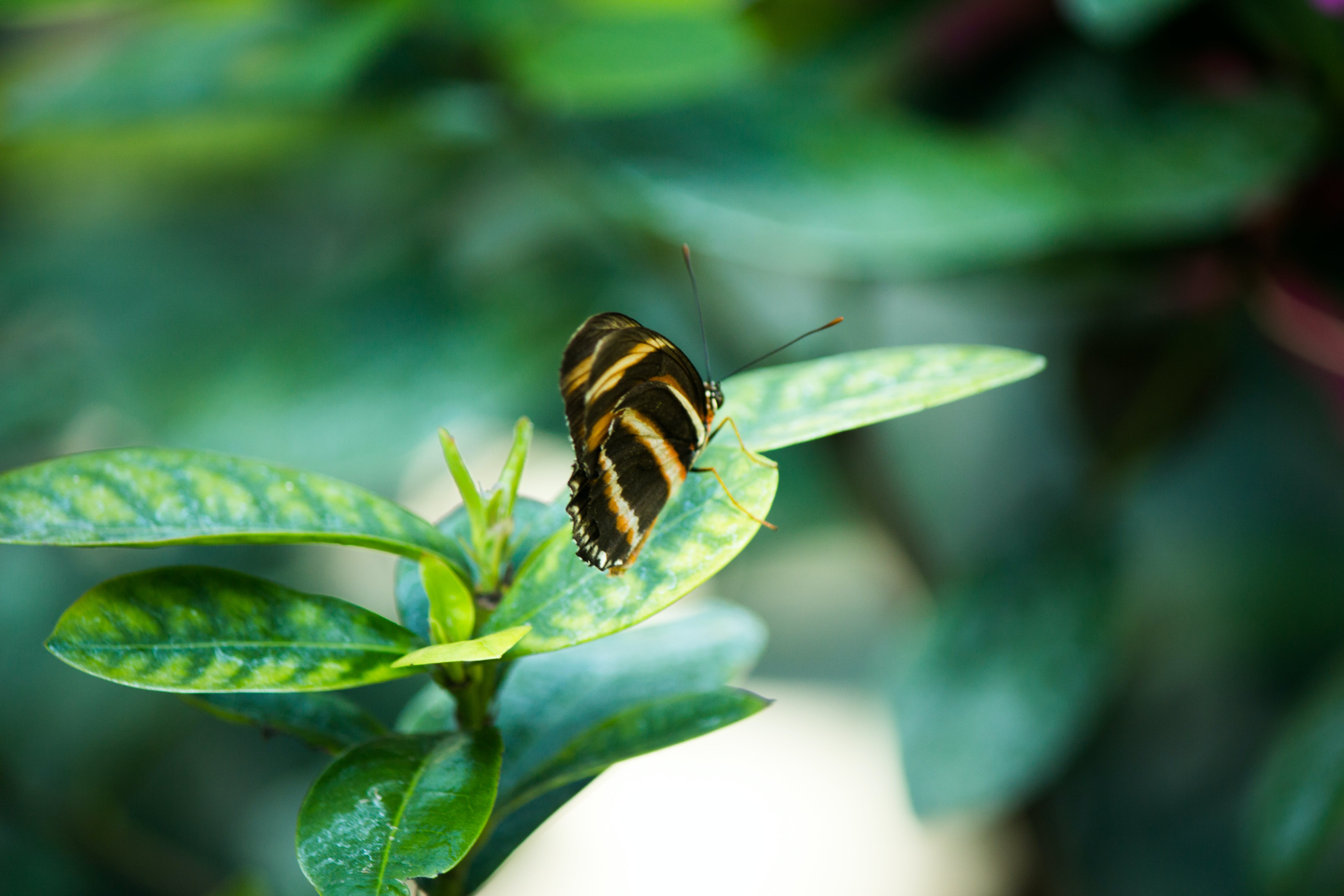 Butterfly on Plant Leaf