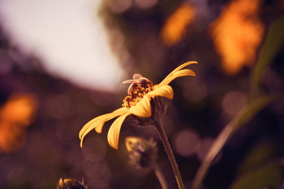 Close-Up Photo Of Bee Perched On Flower