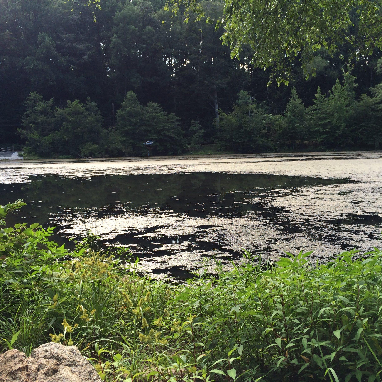 Free stock photo of lake, water, woods