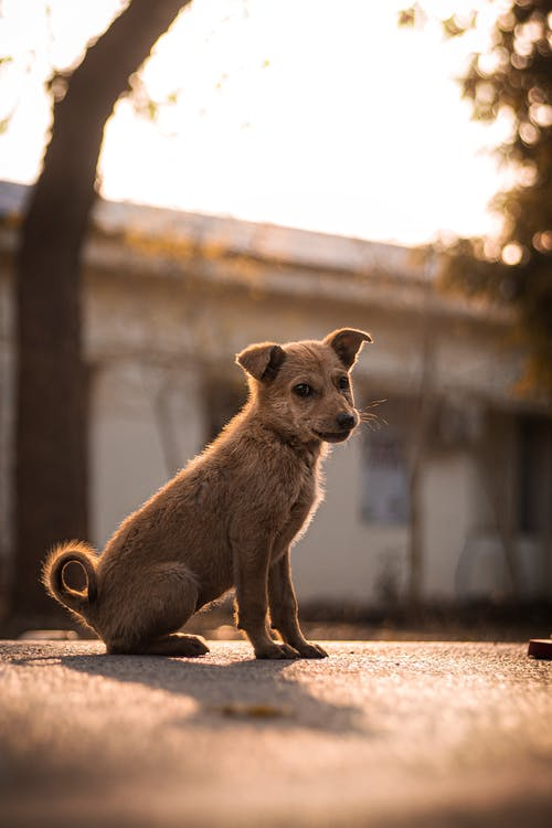 Photo Of Brown Dog Sitting On Road