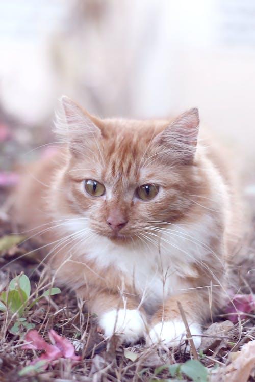 Gratis stockfoto met beest, dier, dierenportret, kat