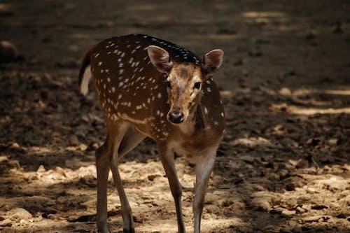 Fotos de stock gratuitas de adorable, adular, animal, animal salvaje