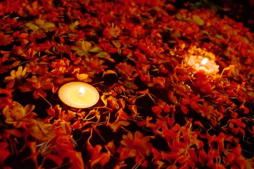 Free stock photo of beautiful flower, candle light, flower
