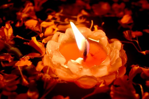Free stock photo of beautiful flower, candel, candle light