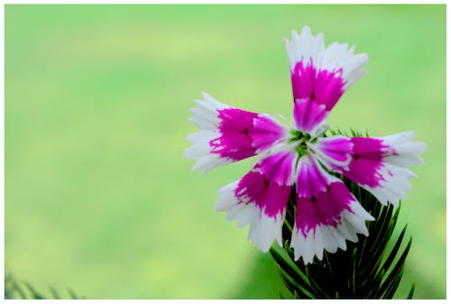 Free stock photo of artificial flowers, beautiful flowers, evergreen