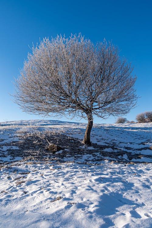 Photos gratuites de à couper le souffle, arbre, beauté