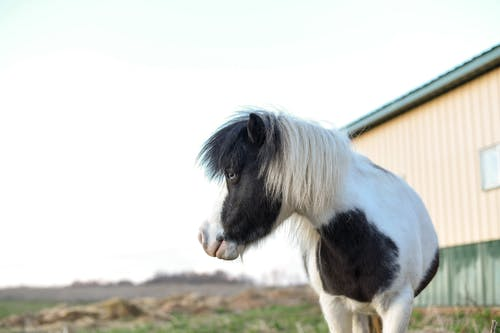 Spotted purebred horse standing in paddock on ranch