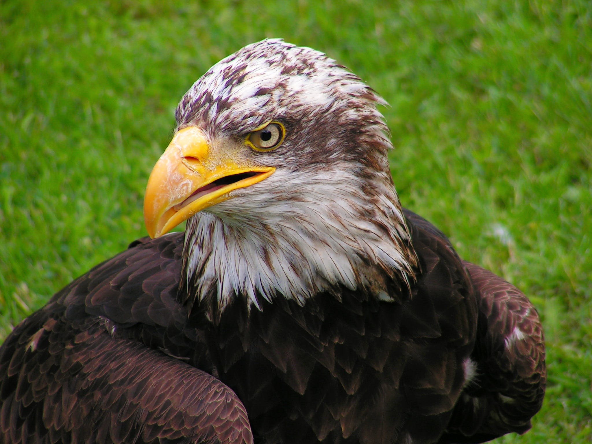 Shallow Focus of Eagle
