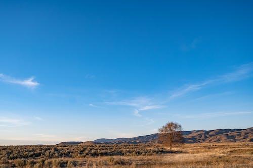 Brown Trees on Brown Field Under Blue Sky