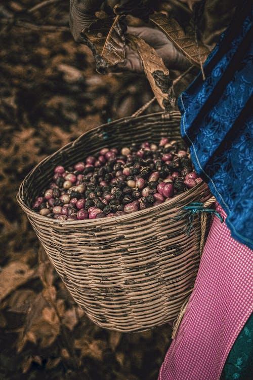 Fotos de stock gratuitas de agricultura, básquet, canasta, cesta