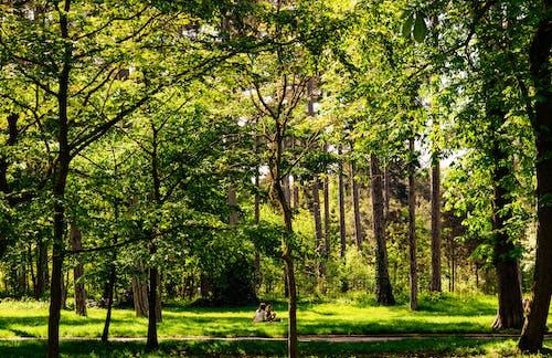 Ảnh lưu trữ miễn phí về ánh sáng ban ngày, bình minh, cây
