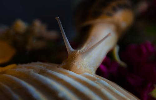 Close-up View Of Brown Snail
