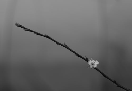 White Flower on Brown Stem