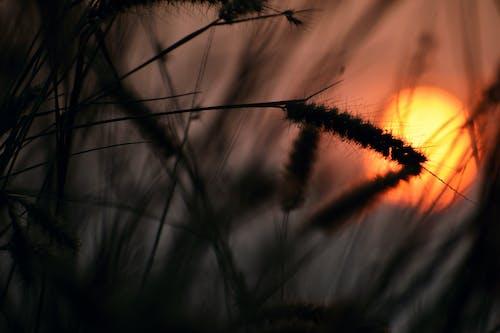 Immagine gratuita di alba, arte, bellissimo