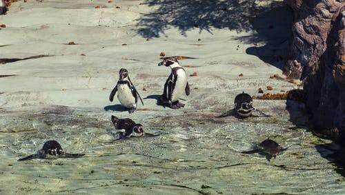 Penguins on Gray Rock on Water