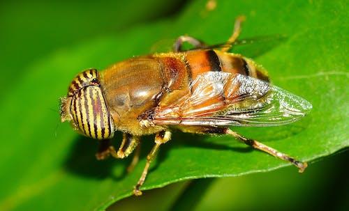 곤충, 매크로, 클로즈업의 무료 스톡 사진