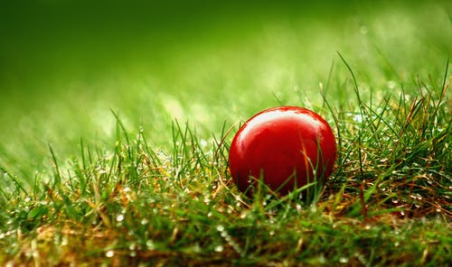 Red Egg on Green Grass