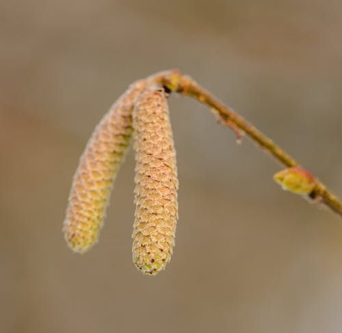 Flower Bud In Close-Up Photography