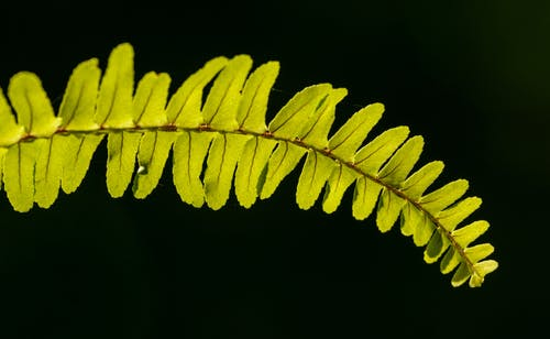 Green Fern Leaf in Close Up Photography